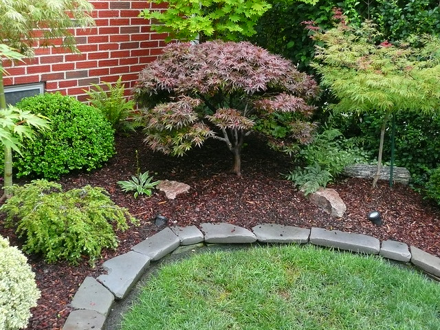 Japanese maple garden flickr photo sharing for Garden design with japanese maple