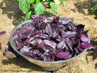 The first Red Rubin purple basil harvest of the season - one pound from three plants | by Farmgirl Susan