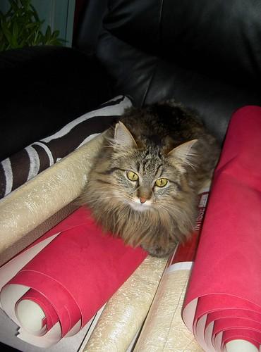 nahla couch e sur les rouleaux de tapisserie du salon flickr