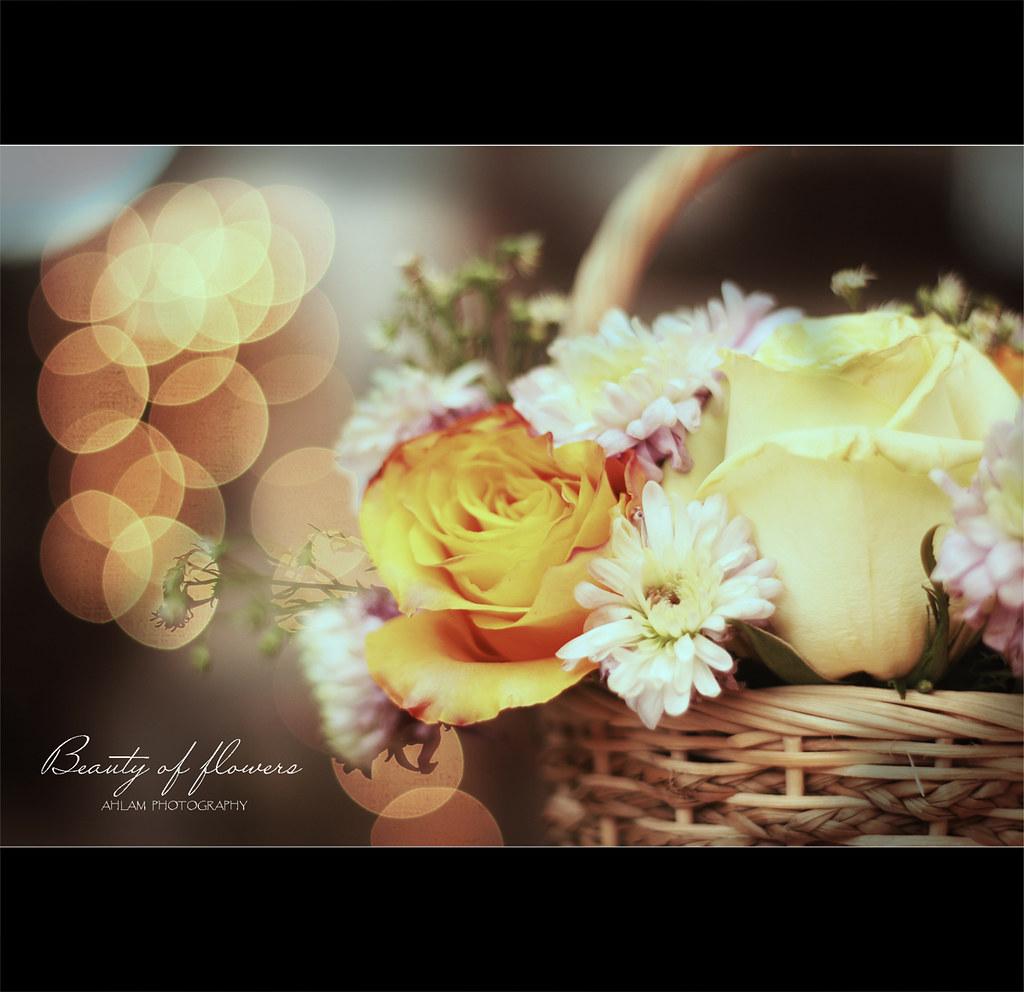 Beauty of flowers flickr beauty of flowers by ahlam alnajdi izmirmasajfo
