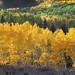 Soapstone Basin Autumn