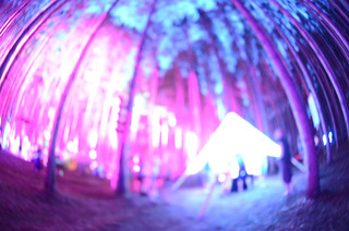 Electric Forrest-2940 | by photonicbliss