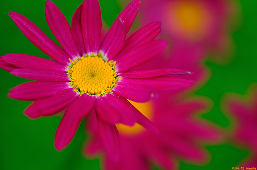 Daisy Floral Abstract (20110623-161955-PJG) | by DrgnMastr