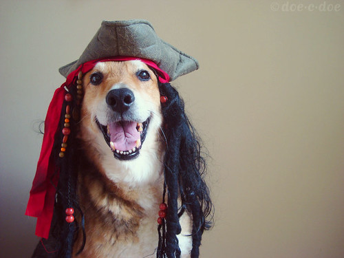 pirate dogs of the caribbean | by doe-c-doe