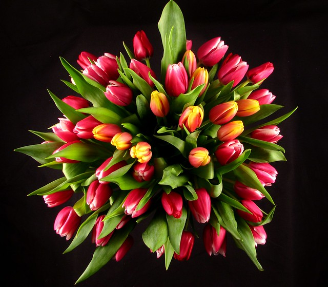 Red Tulip Square arrangement  top view  Flickr  Photo Sharing!