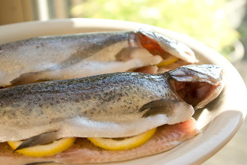 trout stuffed with lemons | by Jessamyn Tuttle
