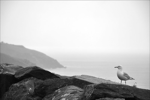 A Dingle Gull | by fincher69