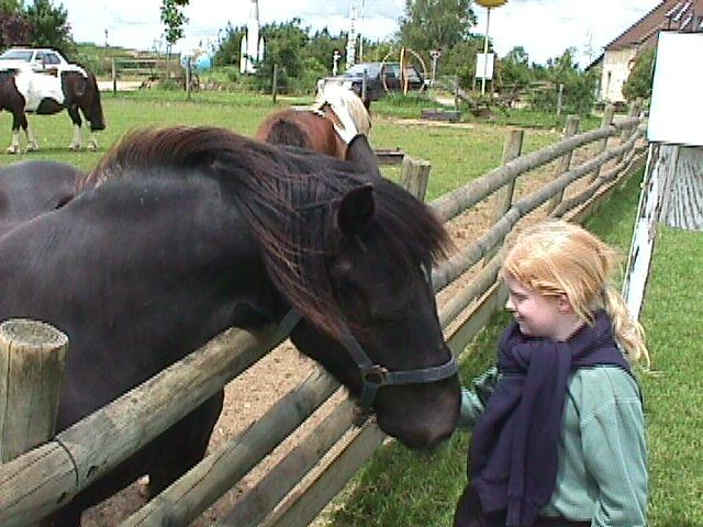 Girl With Horse  Horse, Pony, Black Pony, Black Horse -1546
