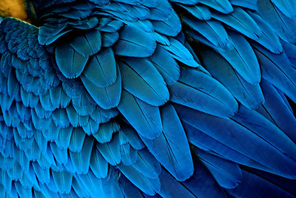 Como el ave fenix - 3 1