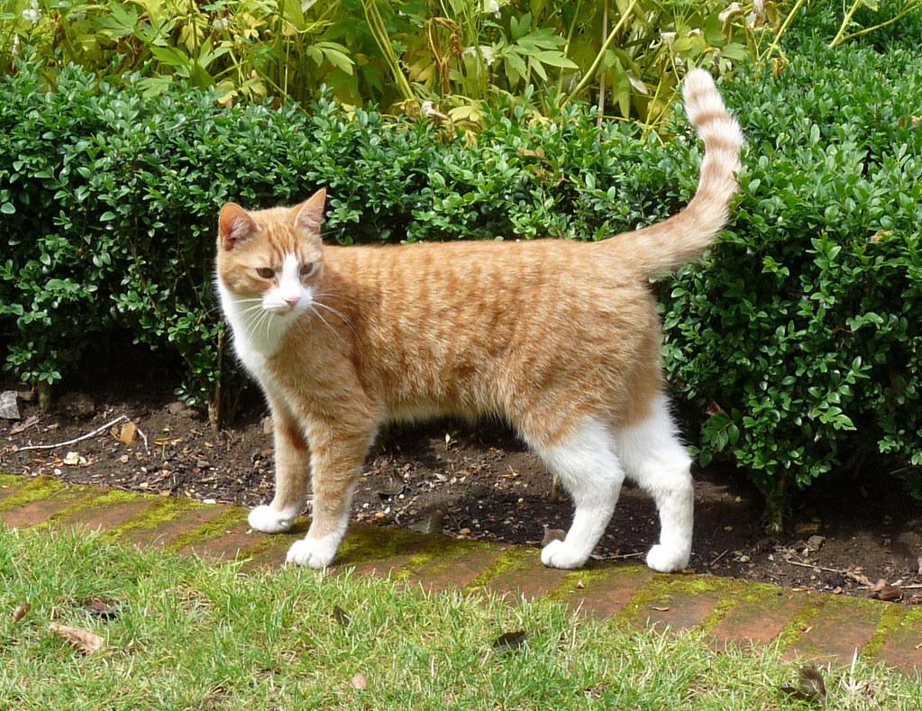 Cat  B Forestiere