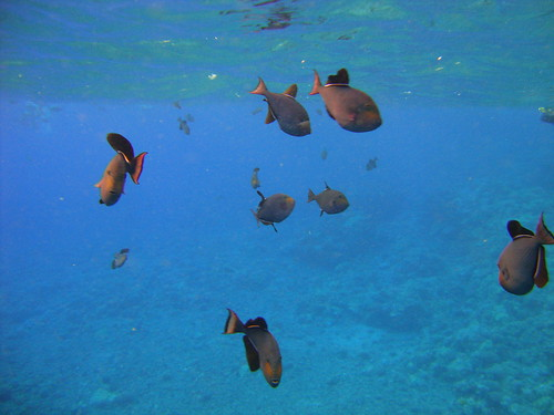 DSC06765 | by rhymeswithmaria