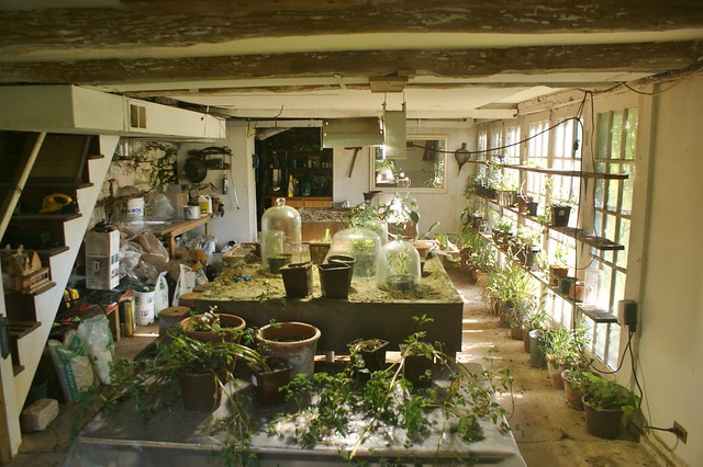 basement greenhouse with growlights flickr photo sharing