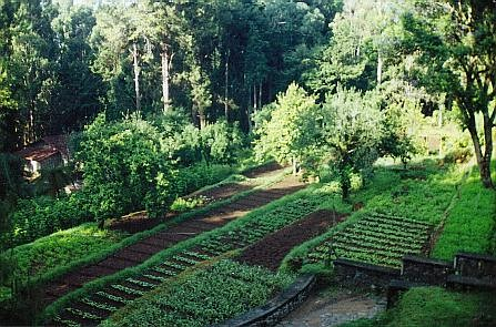 Vegetable Garden Layouts also Cedarwindowbox as well Square foot gardening produces furthermore Protecting Your Vegetable Garden From A Heat Wave besides Runner Beans. on veg garden layout