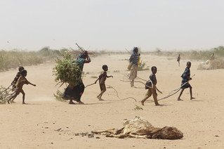 A family gathers sticks and branches for firewood | by Oxfam East Africa