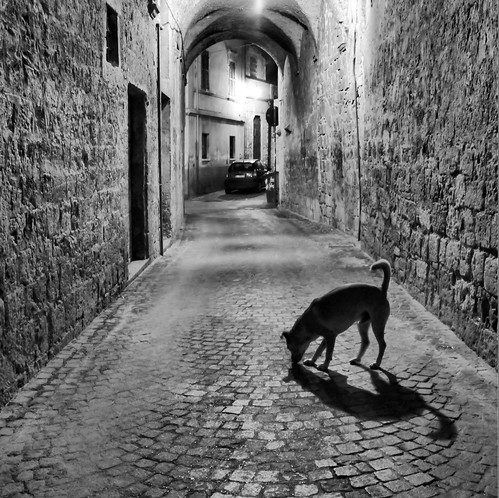 Neanche un cane - Not a soul | by Tommaso Manzi Photos