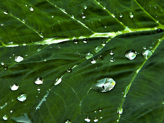 Water Drops | by Katie Whalen Photography