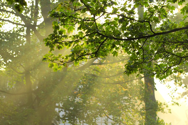Pete Slater: Rays of light through tree branches