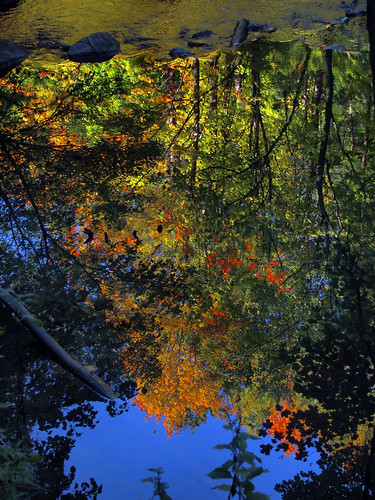 Forest reflections | by AR_the old guy