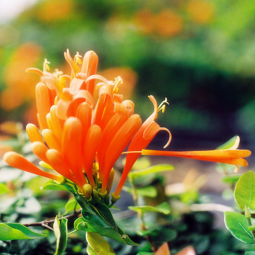 Orange is a Colour that is Safe and Alive | by Khánh Hmoong