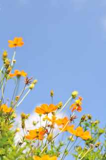 Blue sky, Yellow flower | by Rin.U