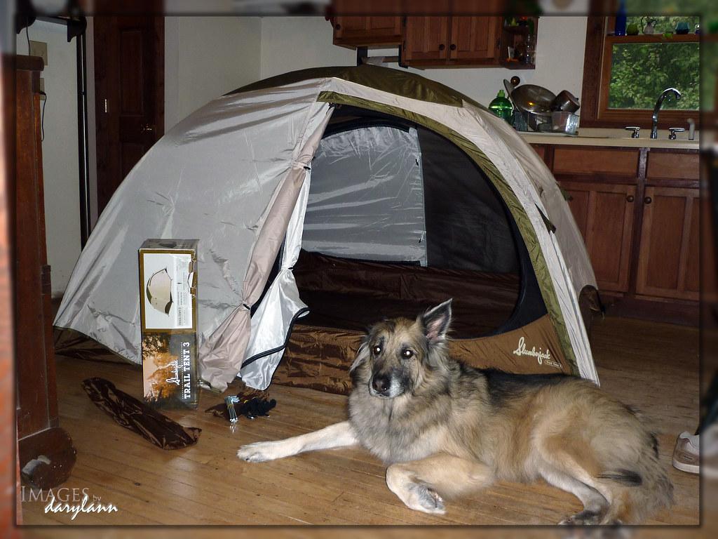 ... Slumberjack tent and Tucker | by darylann & Slumberjack tent and Tucker | UPS delivered my new tent lastu2026 | Flickr