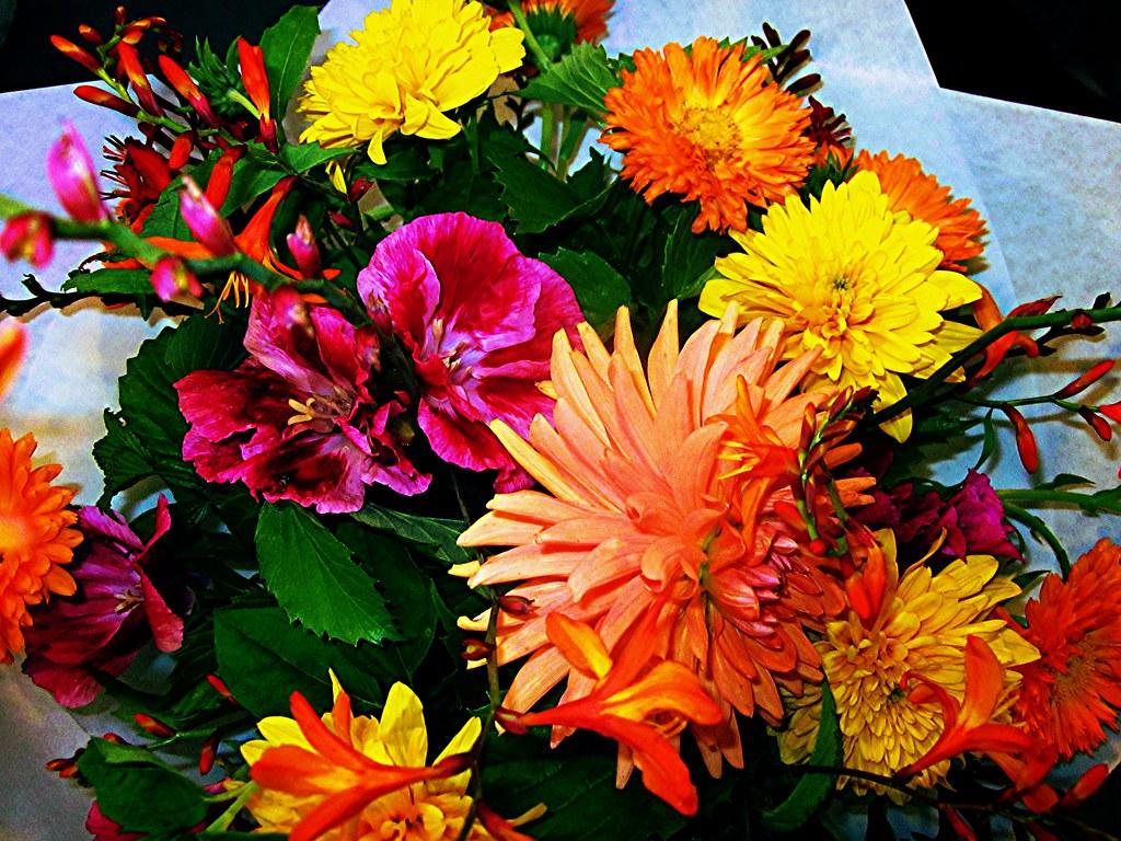 Warm Colored Flowers | Turtlethefrog | Flickr