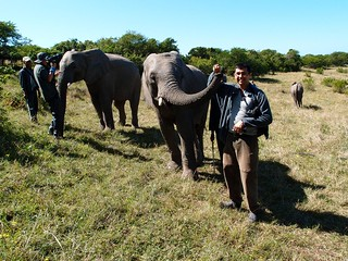 Elephant experience Eastern Cape South Africa | by neeravbhatt