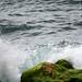 symphony by  crashing waves