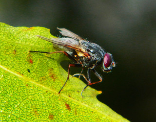 Fly On Leaf | by LostMyHeadache: Absolutely Free *