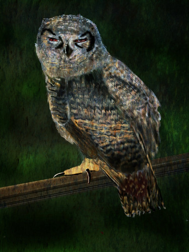 Hungover Owl | by katmulkey