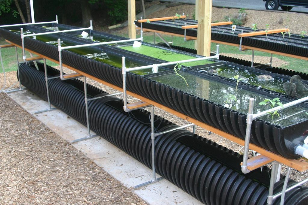 Bioponica Incubator Growing Algae Duckweed
