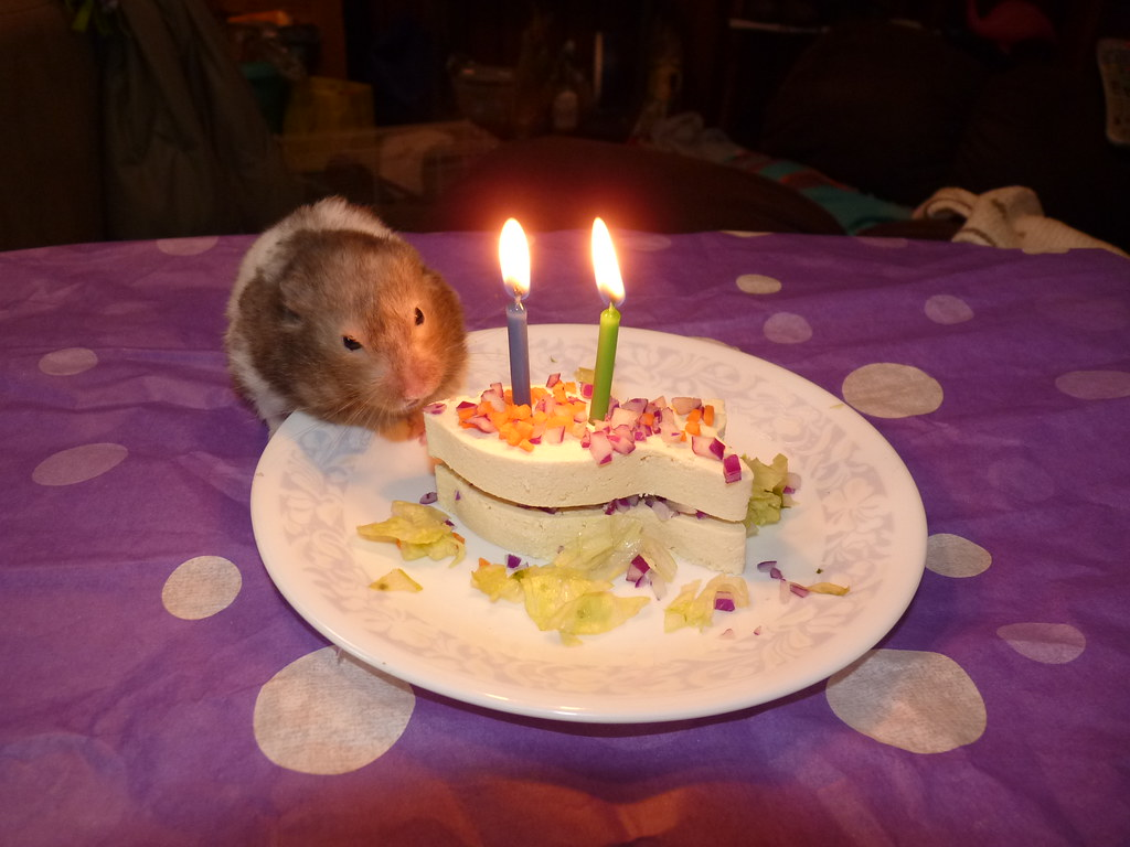 Hamster Birthday Cake Step 6 Light Candles And Add Hamste Flickr
