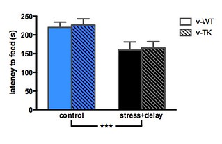 Stress can increase or decrease anxiety | by Functional Neurogenesis