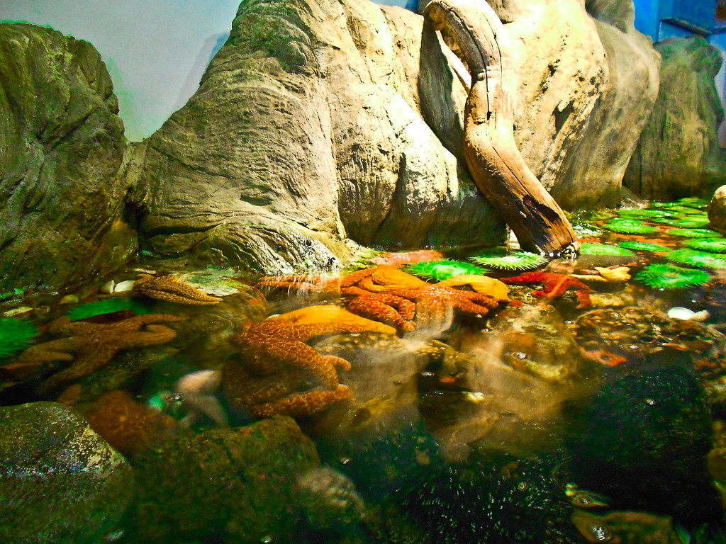 Newport Or Aquarium