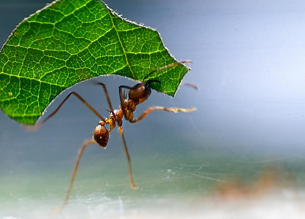 Hard Working Ant Jeanette Svensson Flickr