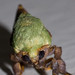 Green Moth 1