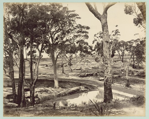 Dam at Loftus Heights, [New South Wales]. | by National Library of Australia Commons