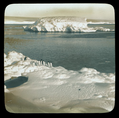 [A group of seven penguins and a sea-elephant on an icy shore, an iceberg and the sea, Australasian Antarctic Expedition, 1911-1914]. | by National Library of Australia Commons