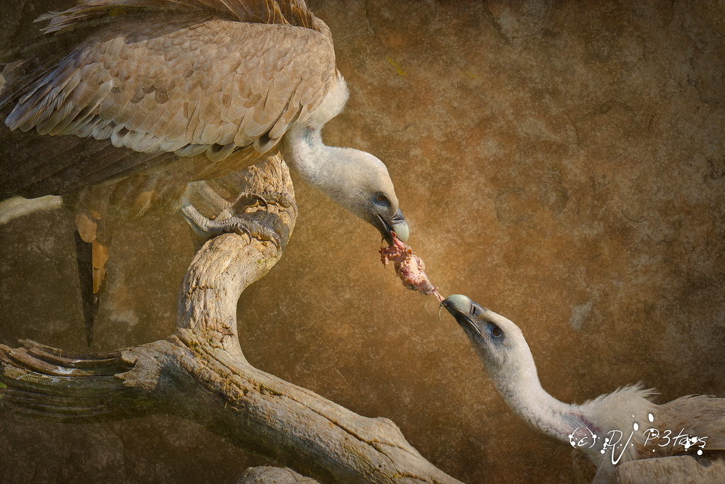 Animals Fighting For Food Animals Fighting For F...