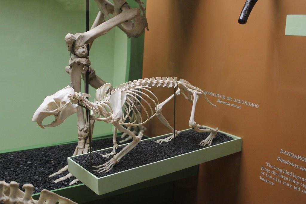 Smithsonian Natural Museum