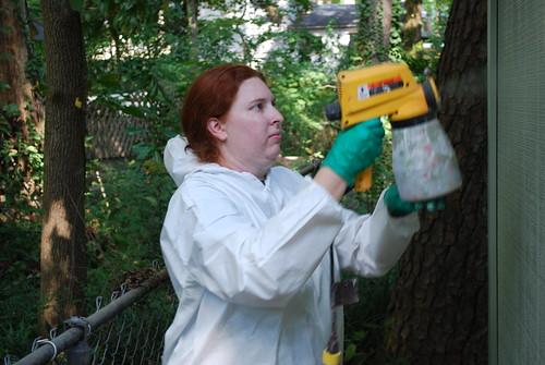 Paint Sprayer Jobs Devon