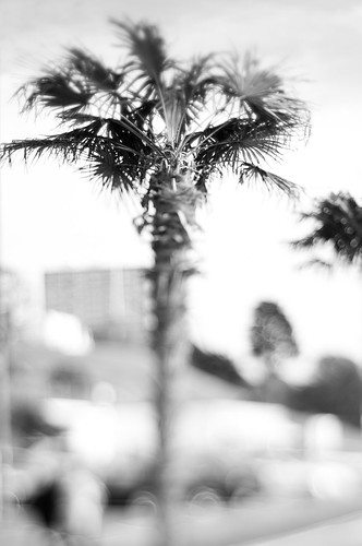 Bokeh Palms | by Simon in Southend