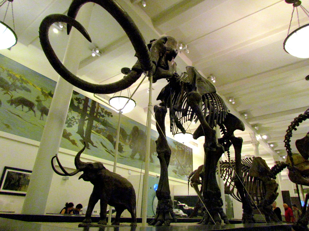 Is The Ny Museum Of Natural History Free