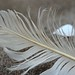 grey feather_013