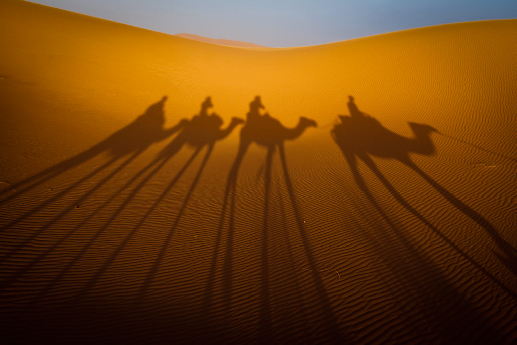 Camel Shadows | Evening camel shadows in the Sahara Desert ...
