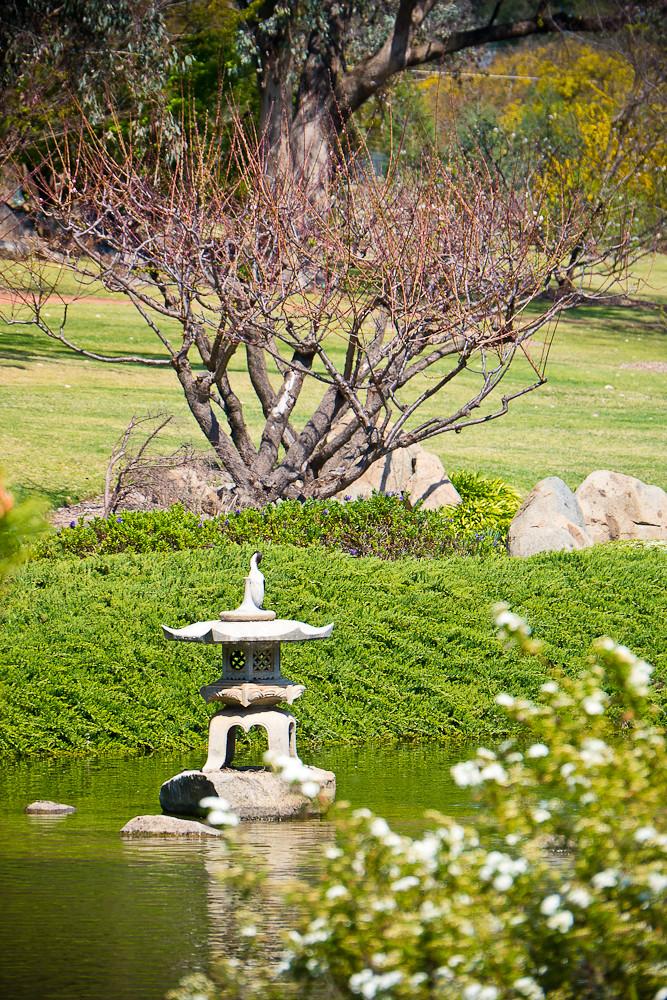 Cowra Japanese Garden_1060369