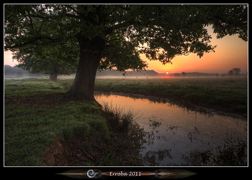 Sunrise Under The Trees | by Erroba