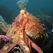 """Octopus"" (A.Ratnikov)"