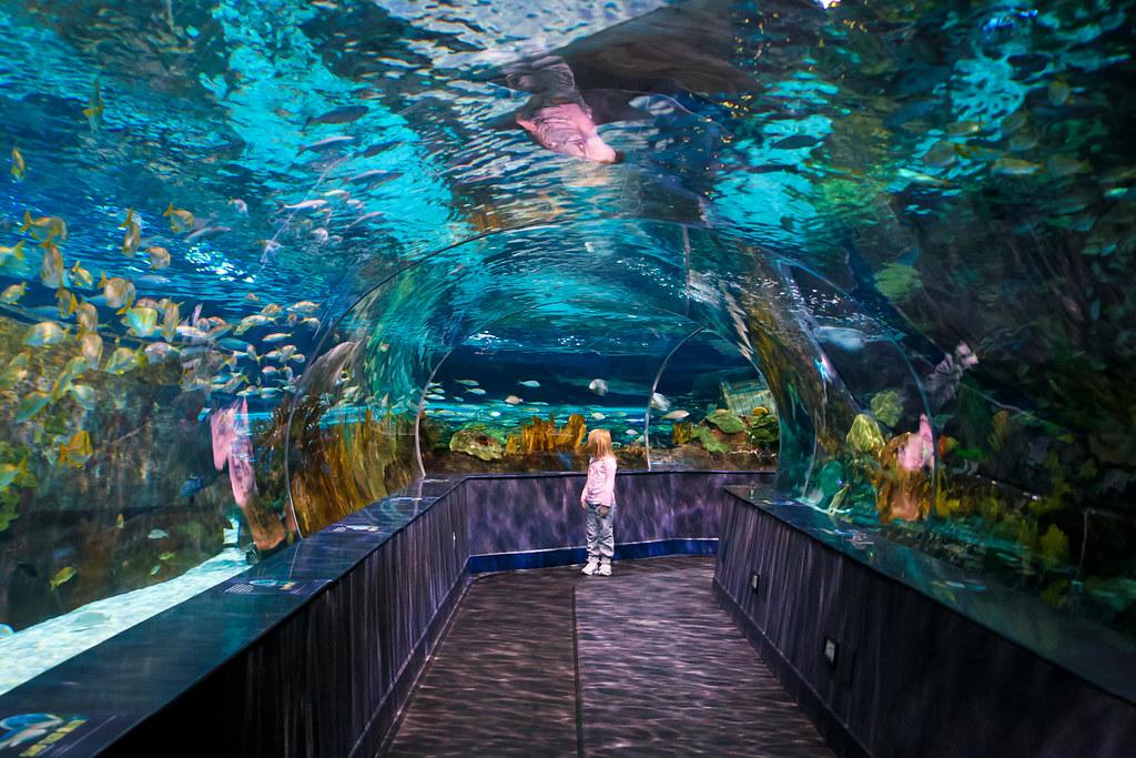 Gatlinburg Aquarium 2 Olga Molchanova Flickr