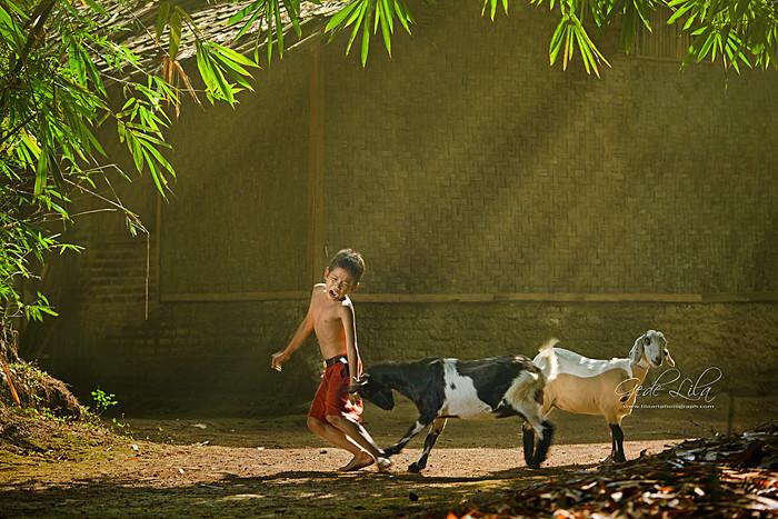 300+ Wallpaper Alam Pedesaan Indonesia HD Terbaik